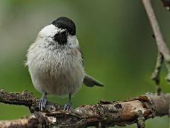 oiseaux 83