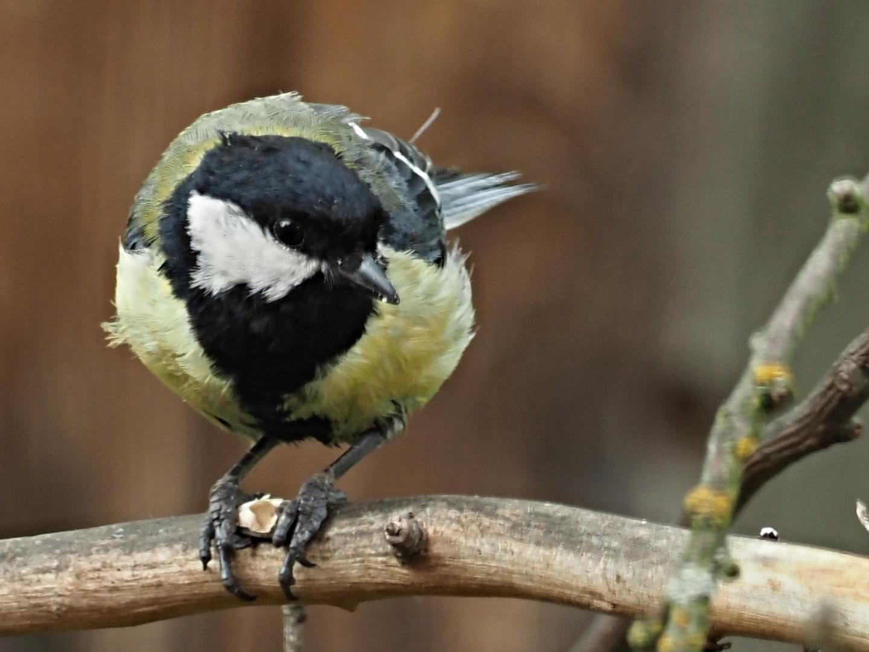 oiseaux 84
