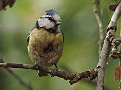 oiseaux 85