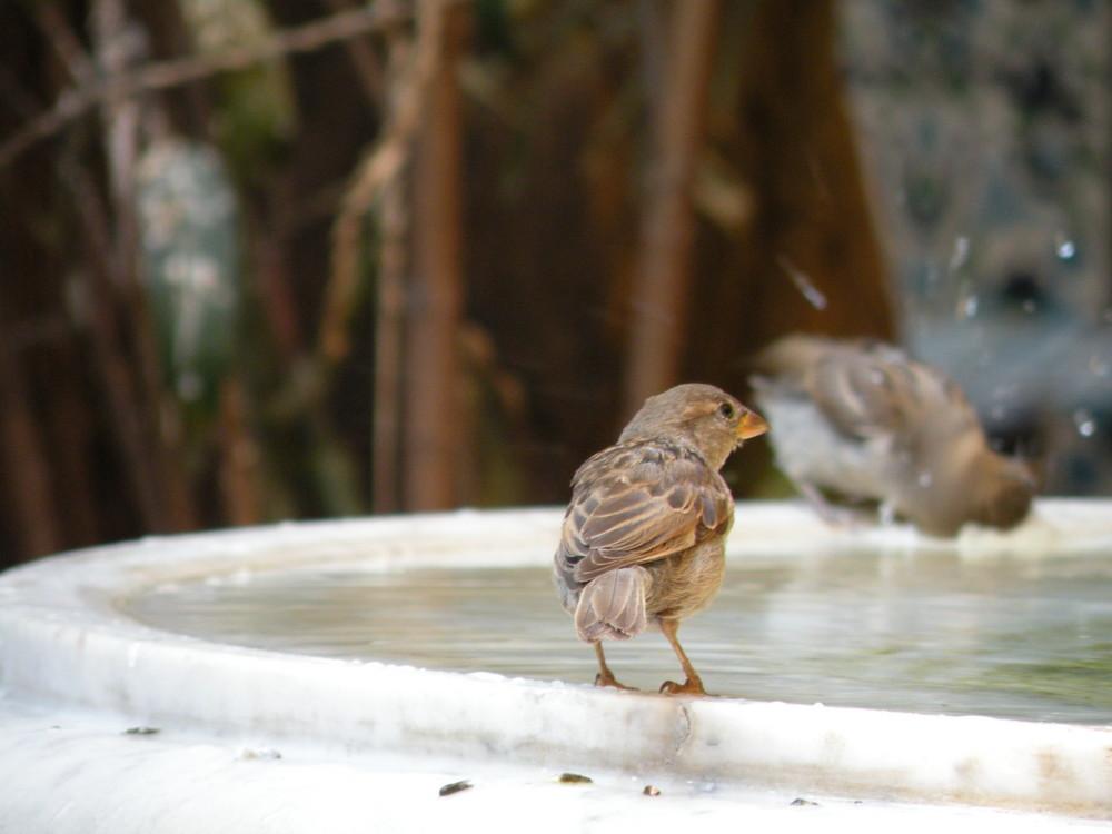 oiseaux à la fontaine de la mosquée de Paris : le jour de l'hommage au yemen