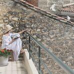 Oiseaux blancs