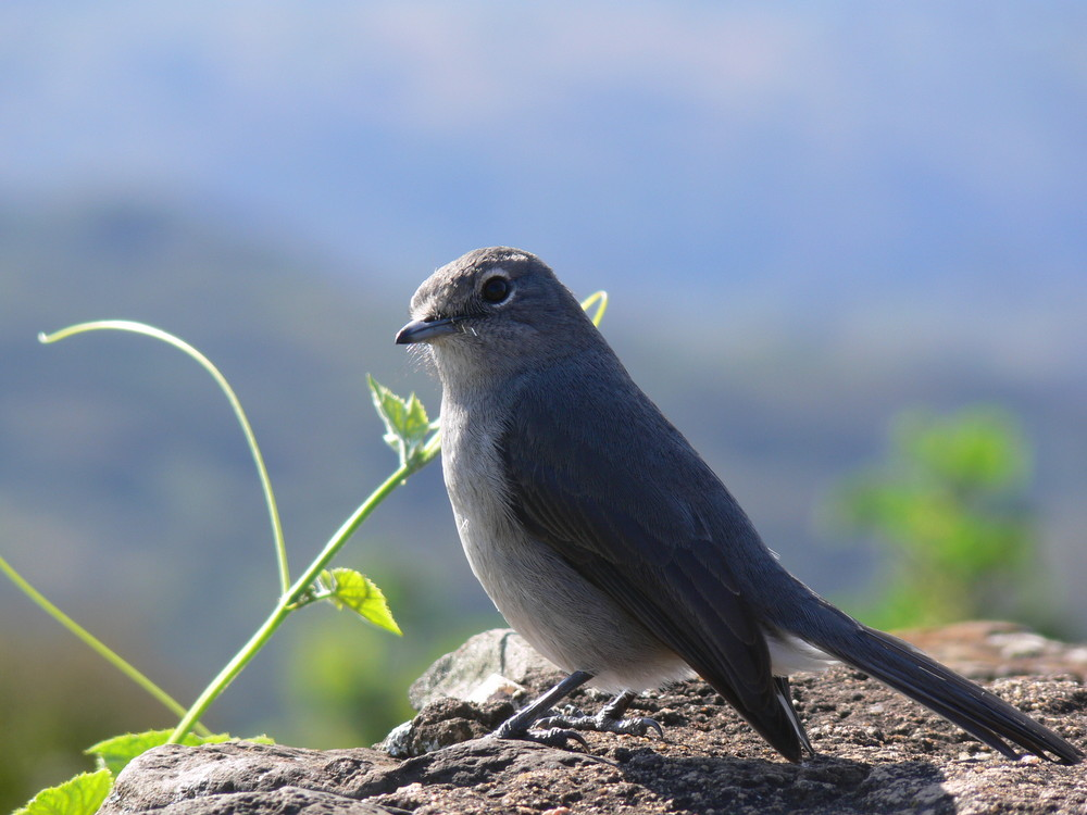oiseaux dans le cratére de Ngorongoro