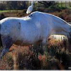 """oiseaux et cheval blance I."""