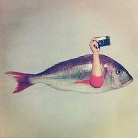 Ojo De Pez - Fotografía