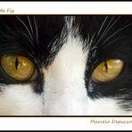 Ojos de Fig