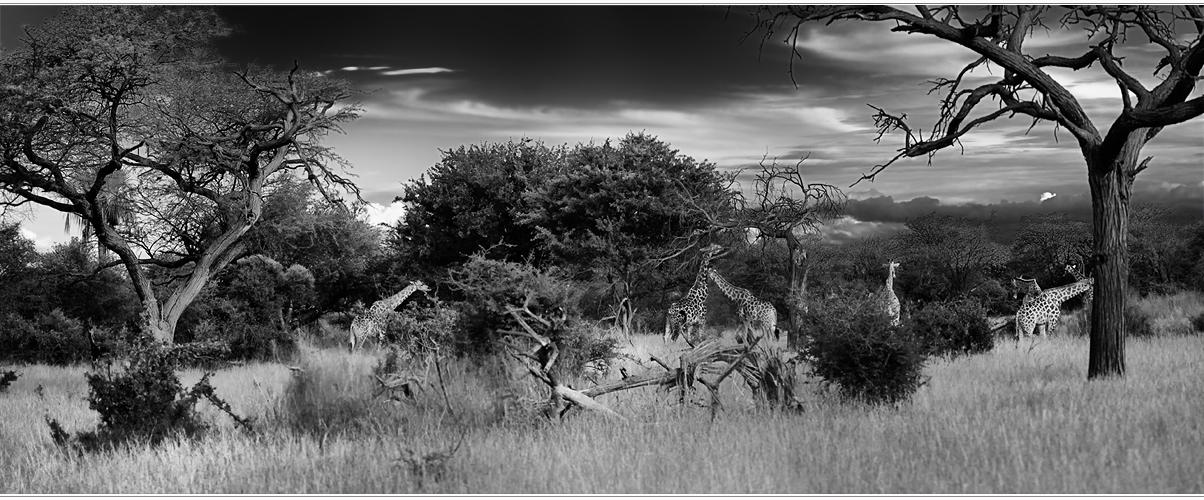 ---Okavango Dreams---