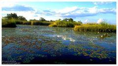 ---- Okoavango-Delta Nr 1. ---- ( Botswana, südliches Afrika )