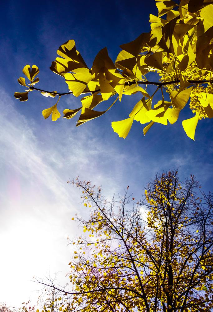 Oktober 2015: Licht