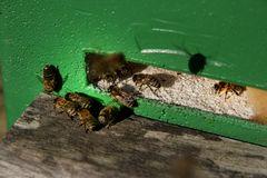 Oktober-Bienen