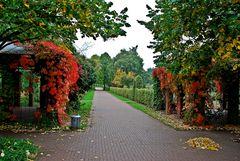 Oktober im Park