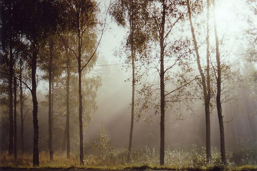:: Oktober in Yered ::