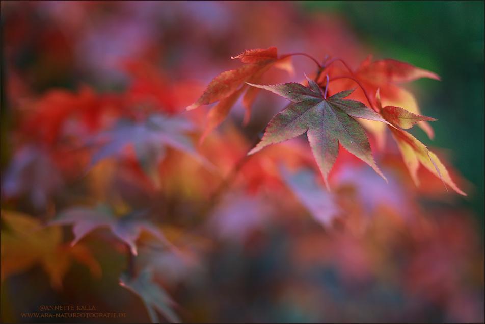 Oktober-Rot