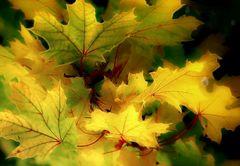 Oktober, Wein und warmes Licht