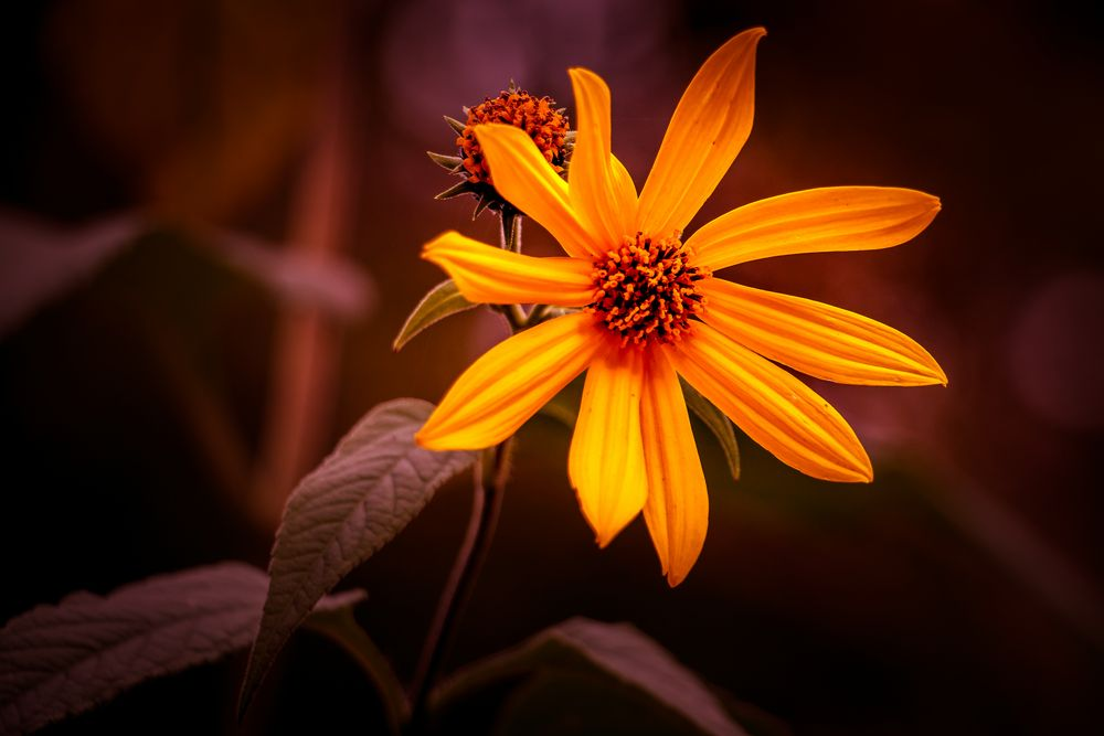 Oktober:Blume