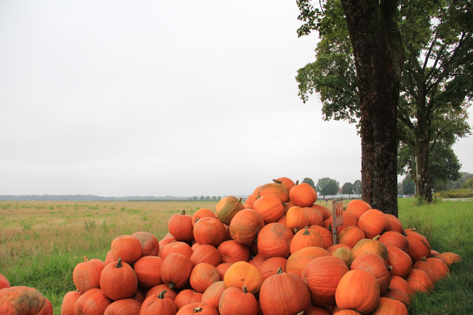 Oktoberfrüchte