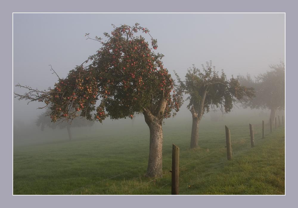 Oktobermorgen im Nebel