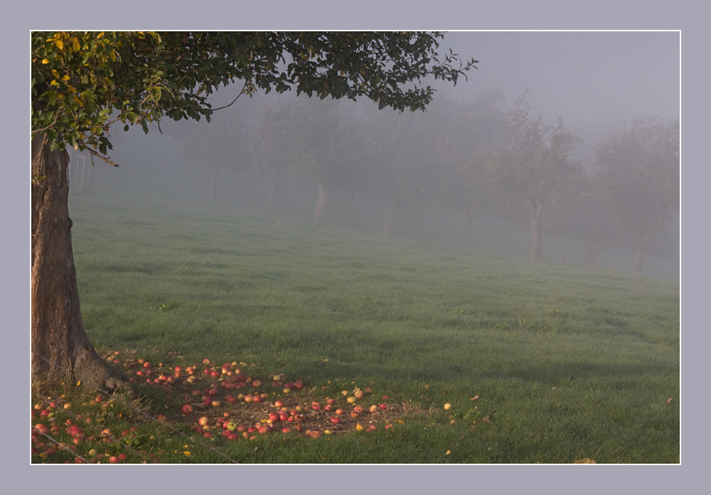Oktobermorgen im Nebel II