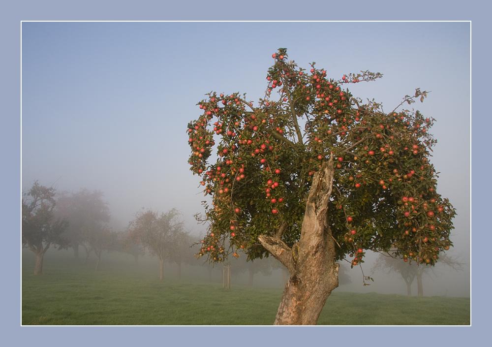 Oktobermorgen im Nebel III