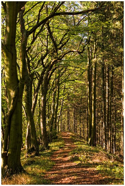 Oktoberwald