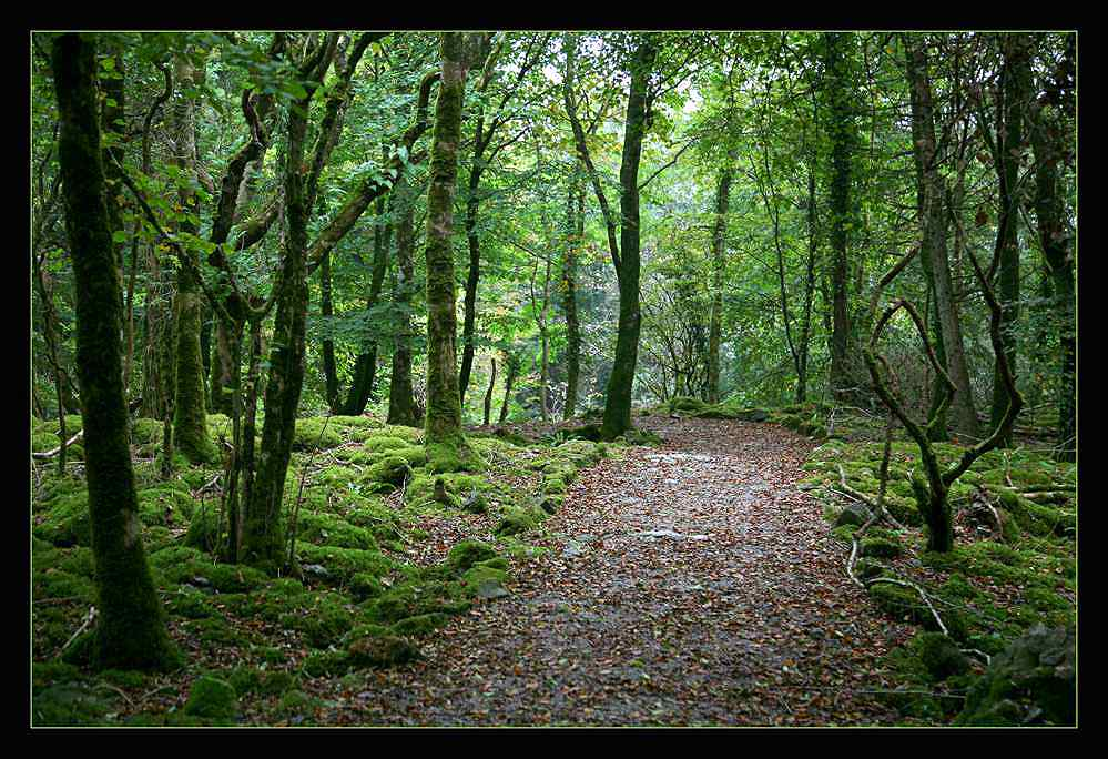 Oktoberwald in Irland