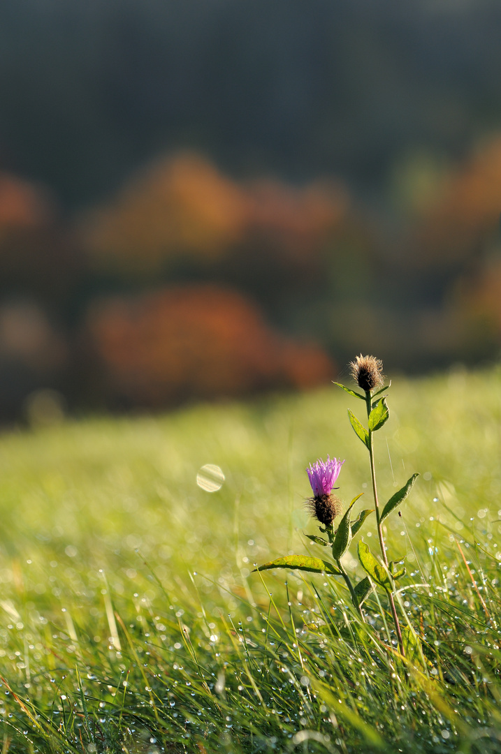 Oktoberwiesen
