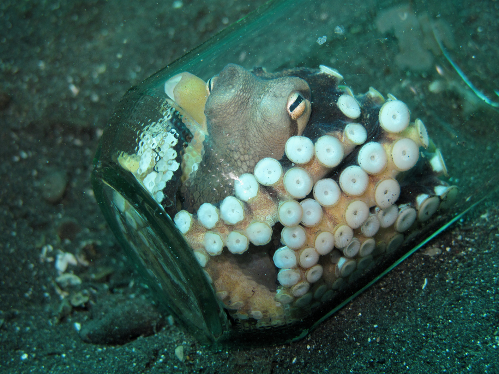 Oktopus im Glas