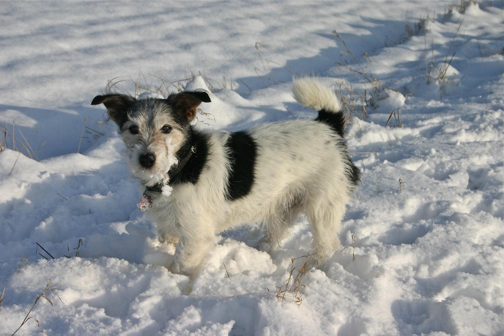 Old Dog Bobby