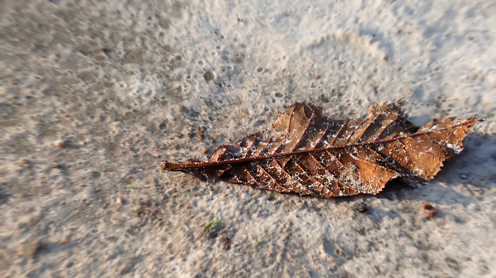 Old dry leaf laying on sand