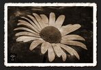 old flower