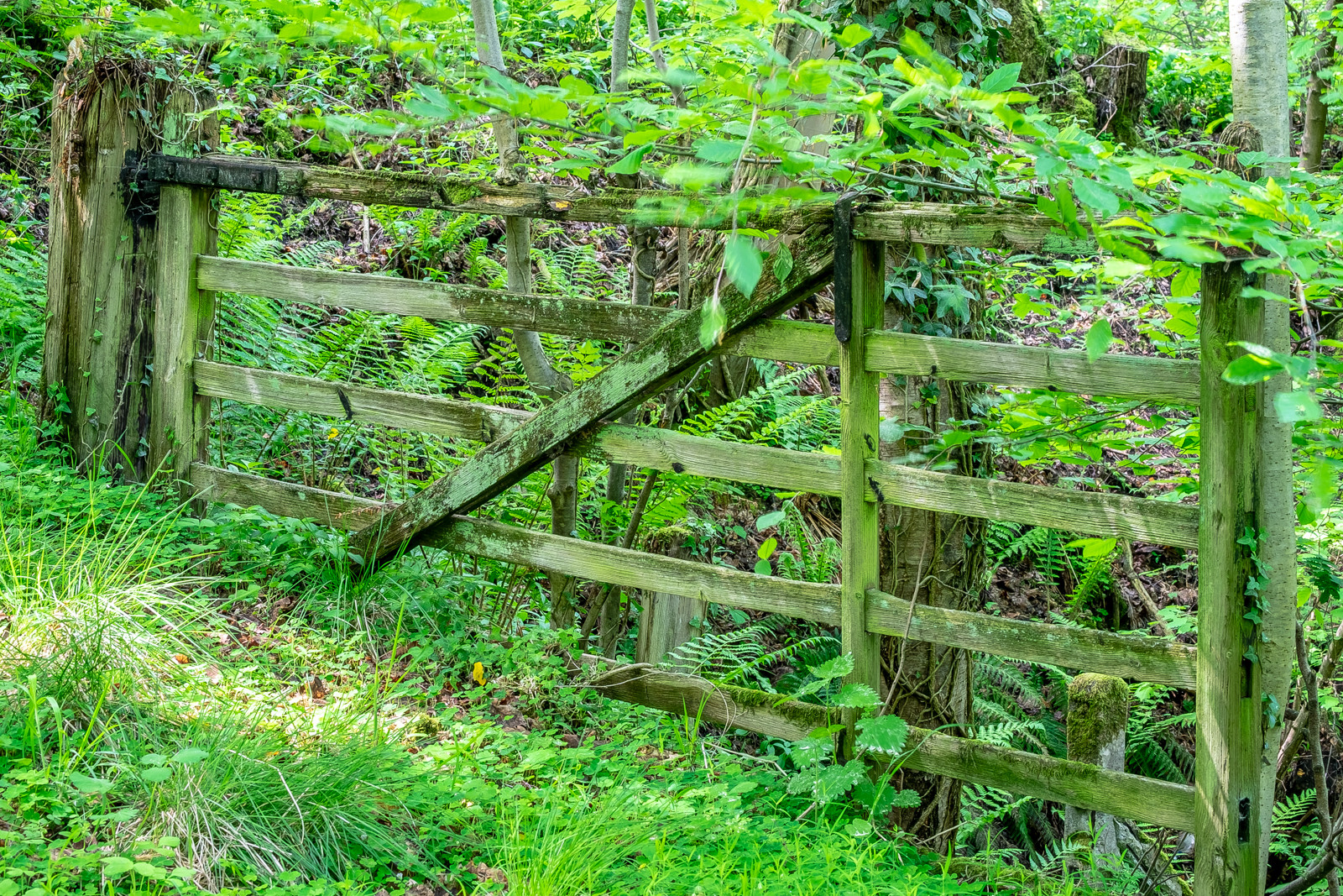 """""""Old Gate"""""""