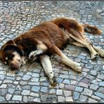 Old happy dog