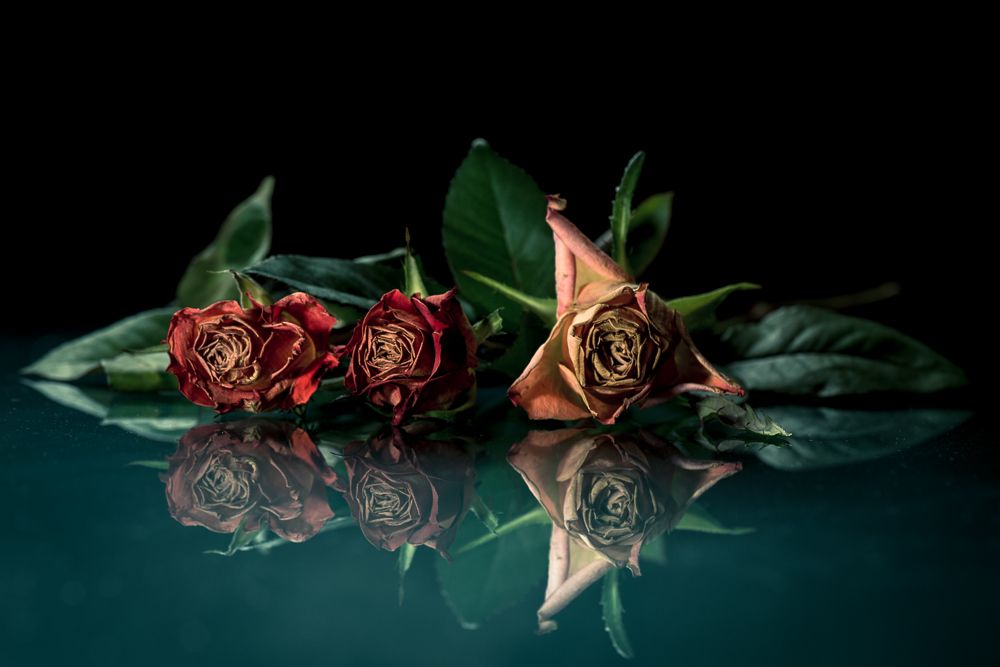 ...old roses can look good, too.