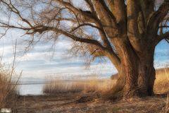 old soul at the lake