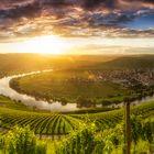 Old Vineyards II