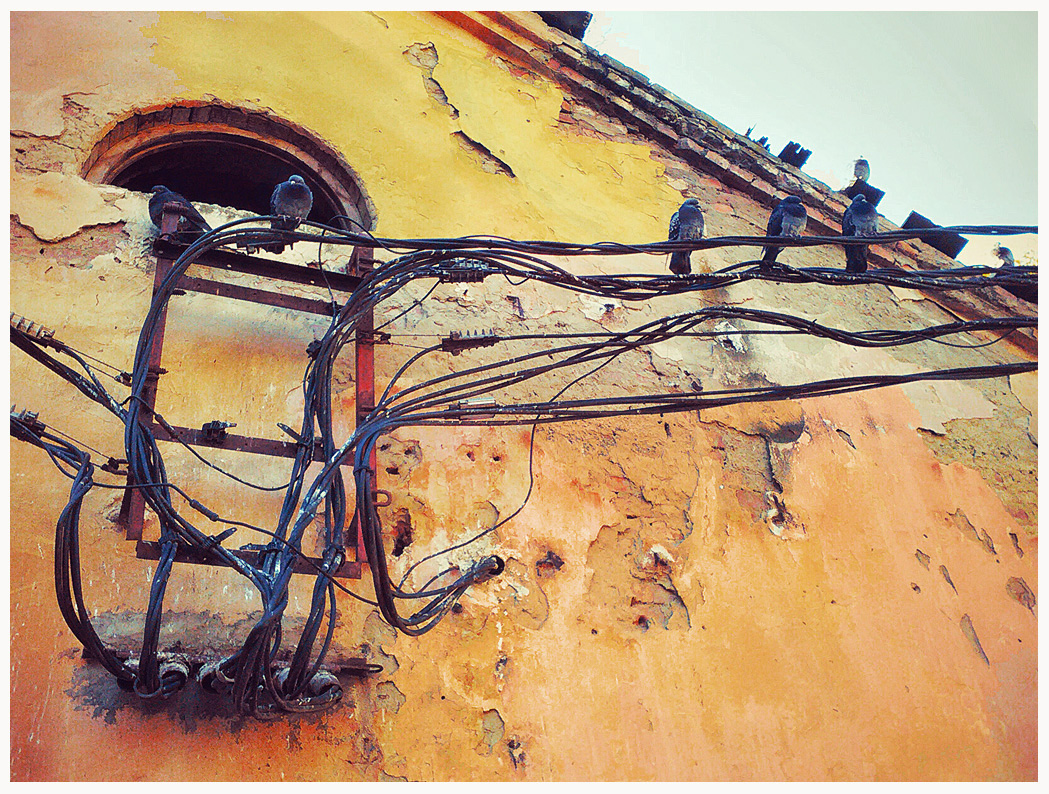 Old wall and doves