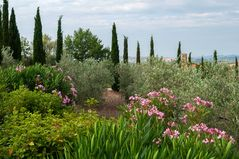 Oleander,Oliven und Zypressen