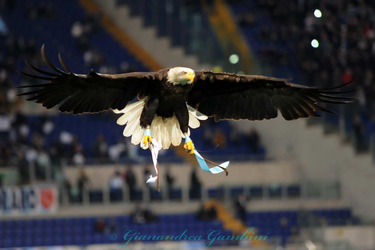 olimpia vola sul olimpico