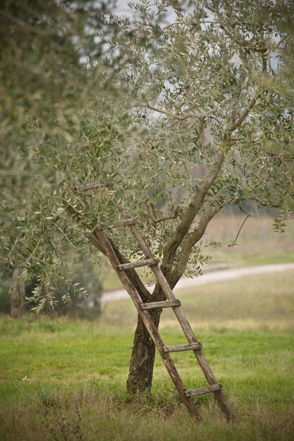 Olive!