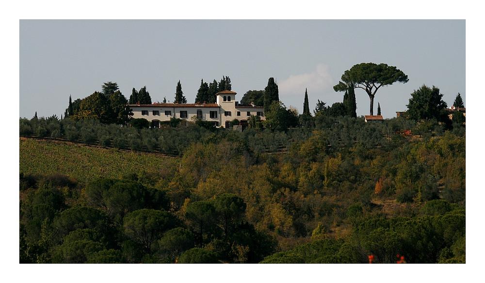 Oliven, Trauben, Pinien und Zypressen...