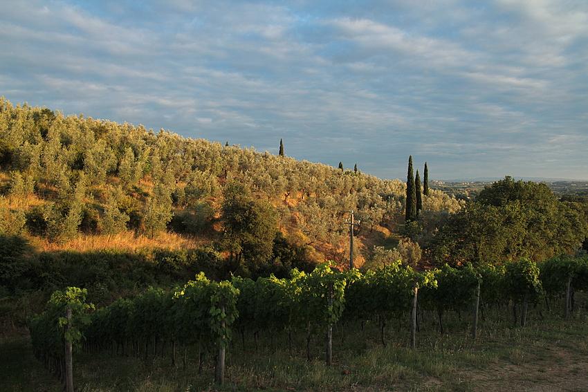 Oliven und Wein im Abendlicht