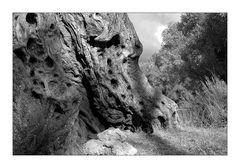 Olivenbäume auf Kreta VI