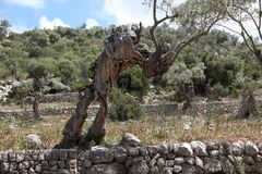 Olivenbaum bei Tossals Verds
