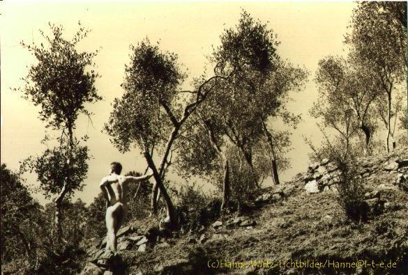 Olivenhain - Cinque Terres
