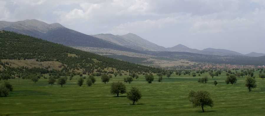 Olivental, Türkei