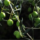 Olives de mon jardin