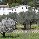 olives et cerises