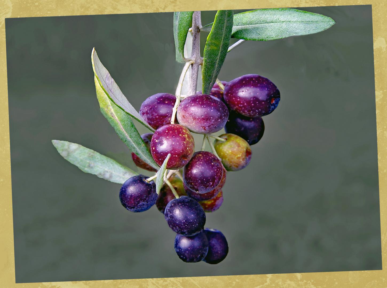 olives noires du jardin....
