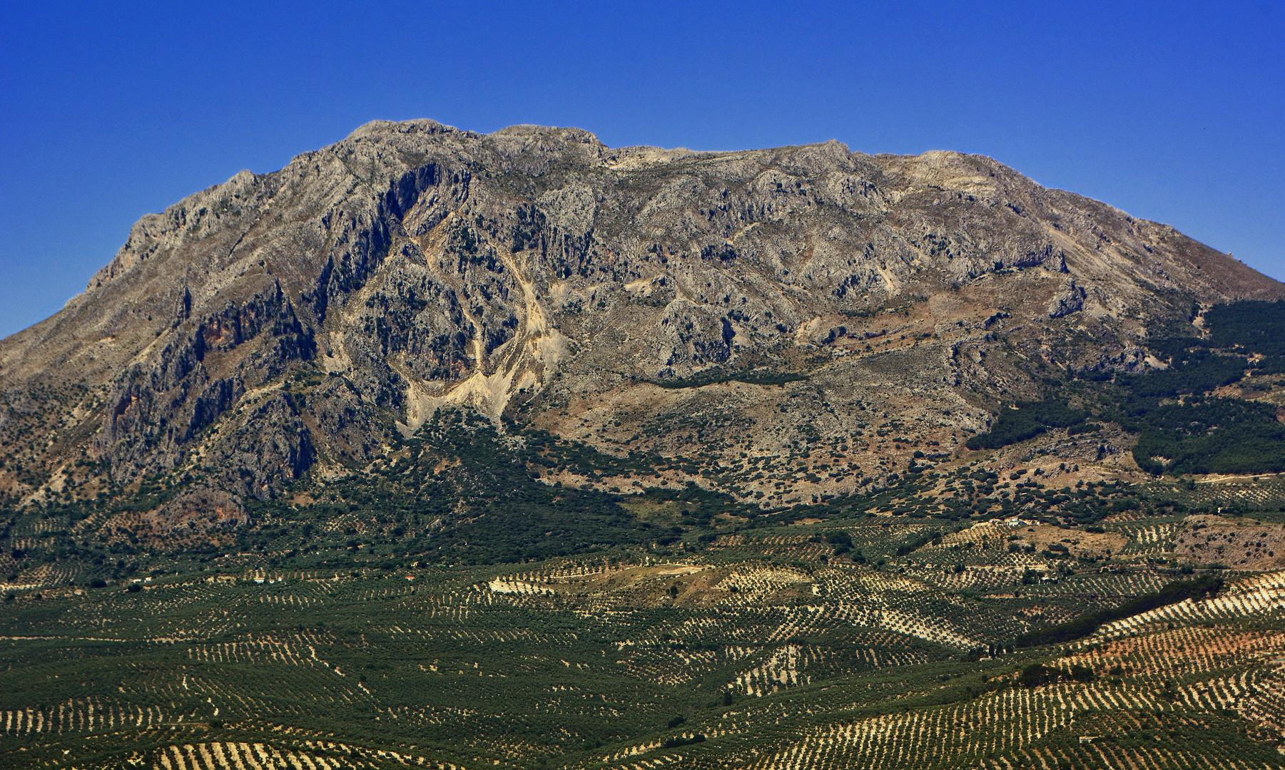 Olivos en Sierra Mágina