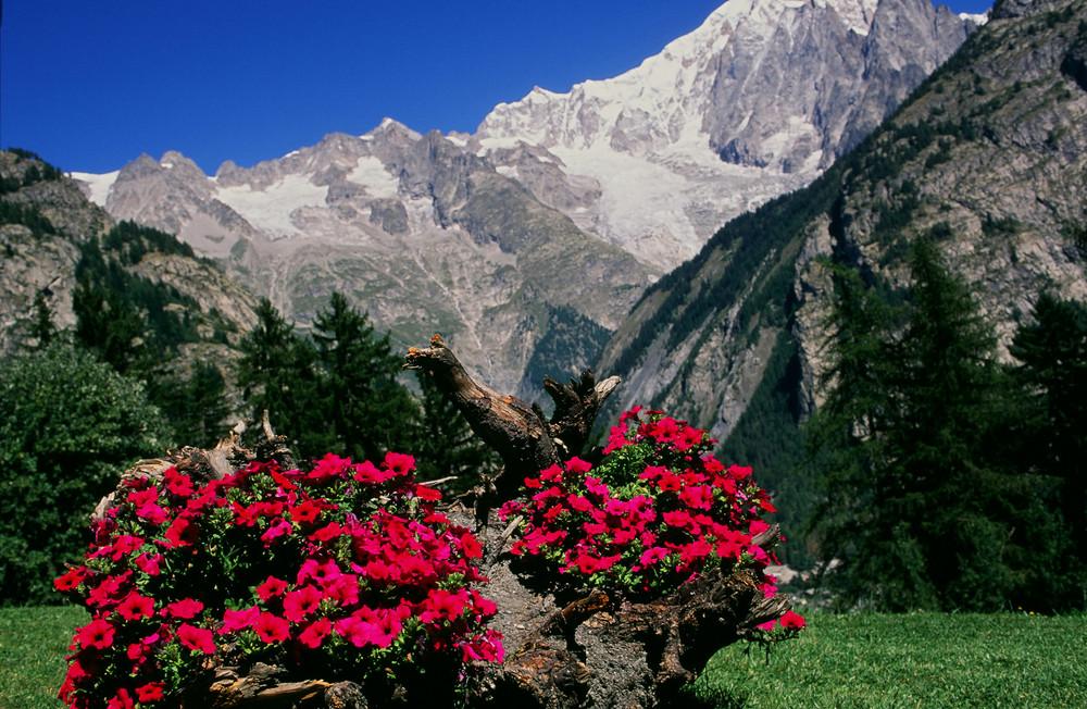 Omaggio floreale al Monte Bianco.
