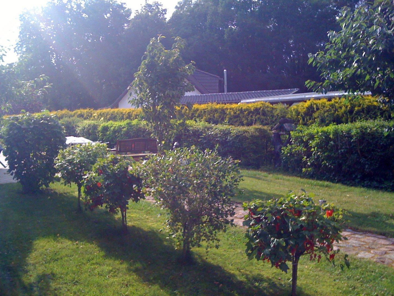 Oma's Garten im Frühling (mit Oma's kamera)
